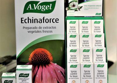Echinacea, defensas